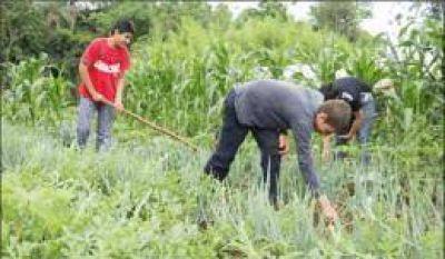 Con más de 32 mil explotaciones, Misiones es la provincia con mayor desarrollo de la agricultura familiar