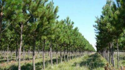 Según estudio Corrientes es la provincia con más superficie forestada del país