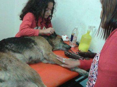 En el Día del Animal denunciaron que una perra fue golpeada y apuñalada por buscar comida en la basura