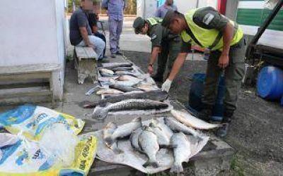 Zárate: Gendarmería secuestra pescado de contrabando