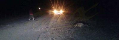 Bañado de los Pantanos: Chocaron un burro y están graves