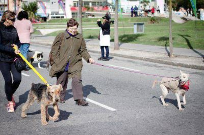 Estiman que hay unos 120 mil perros en Mar del Plata