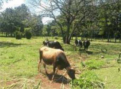 Planifican implementar un Plan de Inseminación Artificial para potenciar la producción lechera
