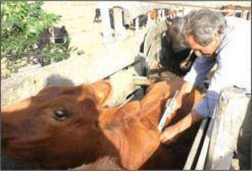 Destacan el trabajo de las asociaciones ganaderas en la campaña de vacunación antiaftosa