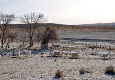Cenizas del Calbuco: habrá una contención fiscal para ganaderos