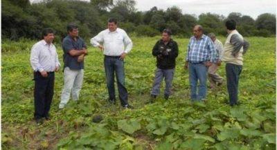 El Gobierno direcciona fuertes políticas de apoyo a la producción hortícola