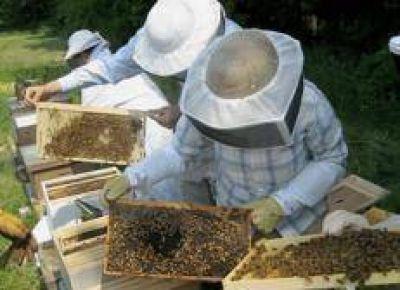 Misiones recibirá 700 mil pesos para el sector apícola