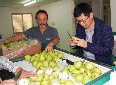 Argentina despach� por San Antonio el primer embarque de peras rumbo a China