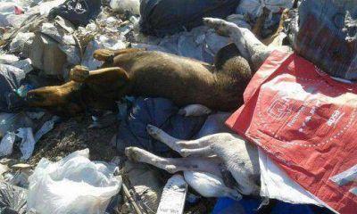 Pilar se moviliza contra la matanza de perros