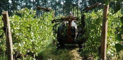 """Diomedi: """"Los productores frutícolas tienen toda la razón del mundo en estar molestos"""""""