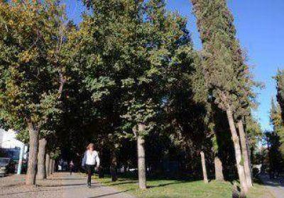 Faltan miles de árboles para que la ciudad respire mejor