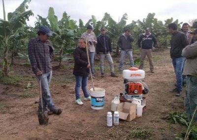 Brindan apoyo técnico en cultivo de banana a originarios de La Primavera