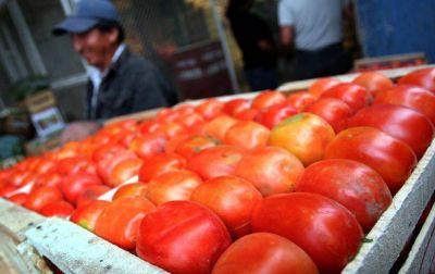 Inundaciones del Noreste, hacen subir precio del tomate en Mendoza