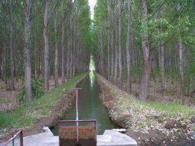 """""""En el Valle Inferior se podrían hacer 400 kilómetros de cortinas forestales"""""""