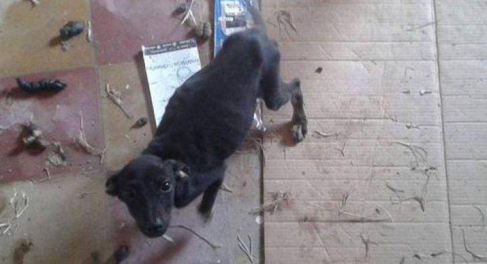 Vecinos denuncian grave caso de maltrato animal