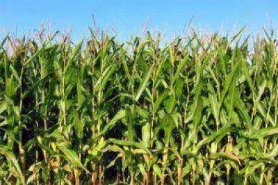 Analizan cómo en maíz, trigo y soja, los rendimientos podrían mejorar hasta un 40%