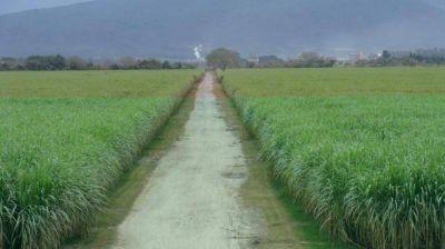 Crisis azucarera: al auxilio de la principal actividad económica
