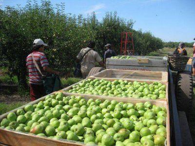Antes de que se pudran, donarán peras y manzanas