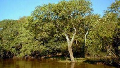 Entregan fondos para la conservaci�n de bosques nativos en Corrientes