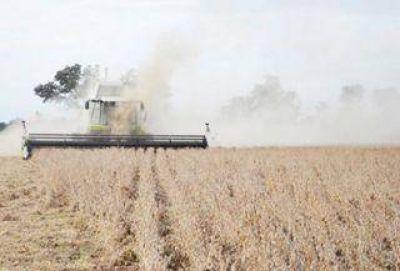 Chaco es la provincia que más utilizó la semilla Intacta y entidades piden que se haga lugar a medida cautelar