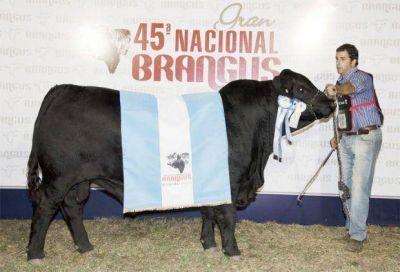 Con el remate televisado de 5000 animales y las primeras juras, arranca La Nación Ganadera Norte
