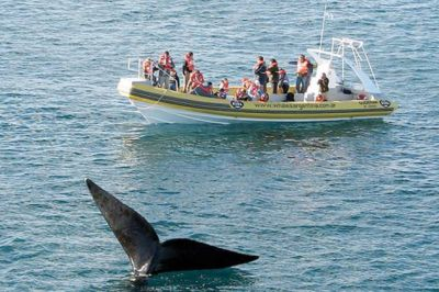 Pen�nsula Vald�s se reafirma como el mejor lugar del mundo para el avistaje de ballenas