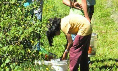 """Casasola alertó por los """"altos índices de trabajo infantil en el partido de General Pueyrredon"""""""