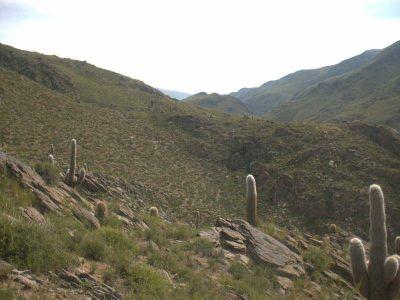 Buscan a baquiano perdido en el monte