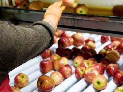 Se reabre exportación de fruta a Brasil