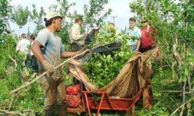 Yerba Mate: Productores reclaman nuevo precio, tras el reconocimiento de Nación