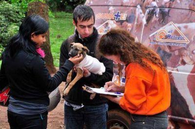 Invitan al Festival por un hospital veterinario gratuito en Posadas