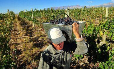 La vitivinicultura deberá tributar unos $ 100 millones, si se sanciona una ley