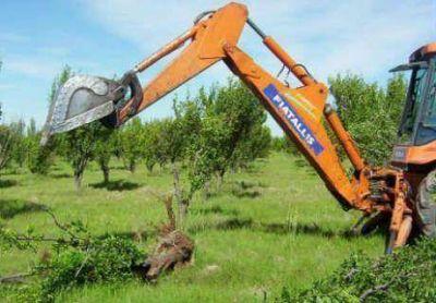 Comenzarán a verificar montes frutales abandonados en el Alto Valle
