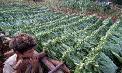Tabaco: reajustes y controles ante la ca�da de la demanda