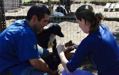 Jornada de adopción canina