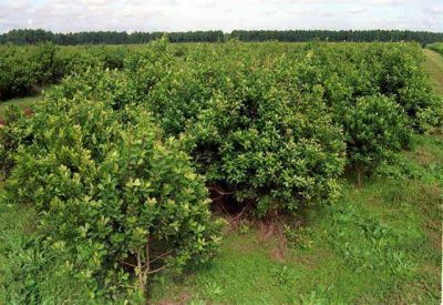 """El Gobierno defiende el precio de la yerba: """"está mejor que otros años"""""""