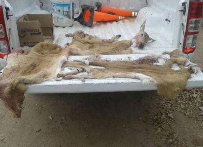 Multa de casi 200 mil pesos para cinco mercedinos por cazar Venados de las Pampas