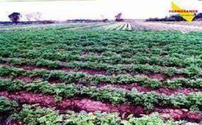 El Cedeva demostró que centro-oeste es totalmente viable para la produccion agropecuaria
