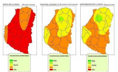 Emiten un alerta por enfermedades del trigo en la provincia