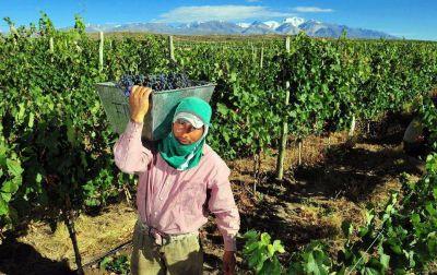Demoras en pagos a productores vitícolas llegan hasta los 12 meses