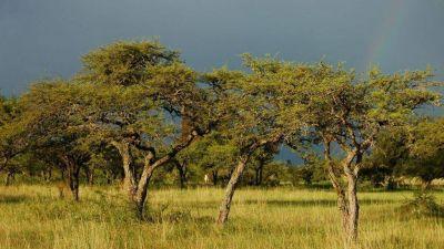 Entre Ríos empezará a aplicar la ley de bosques