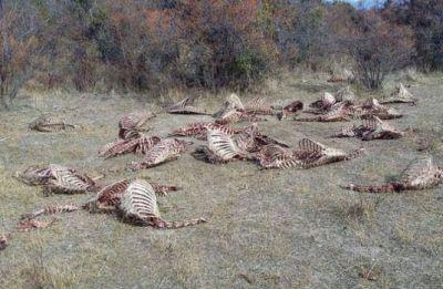 Invesitigan masiva matanza y faena de ciervos en el Parque Nahuel Huapi
