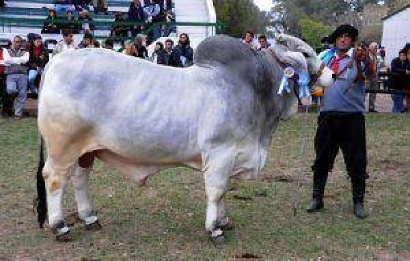 Con la presencia de Llambías, se inaugura hoy la 80º exposición de la Rural y la 8º nacional Brahman