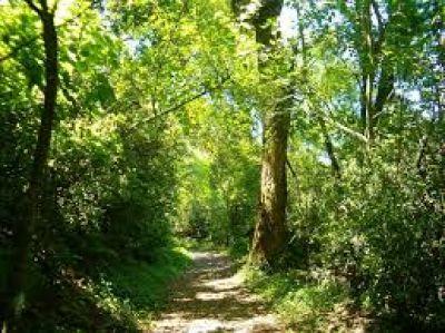 """Expresan """"incertidumbre"""" por la ley de bosques"""