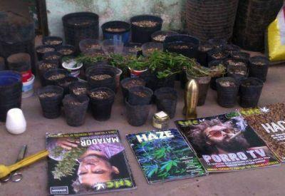 Secuestraron 63 macetas con marihuana