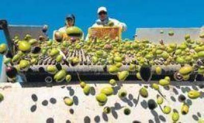 30 millones en cr�ditos blandos para el golpeado sector oliv�cola
