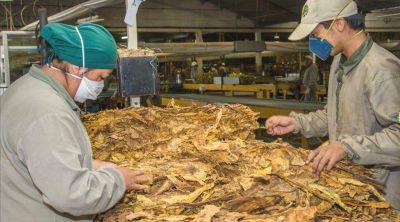 Ca�da triple del tabaco: menos kilos, calidad y repartos del FET