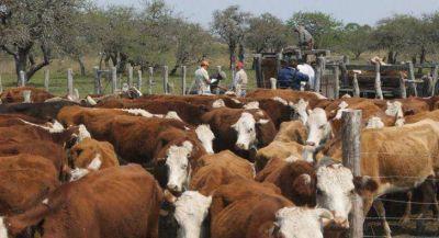 Avanza el Plan Genético Bovino en la zona rural