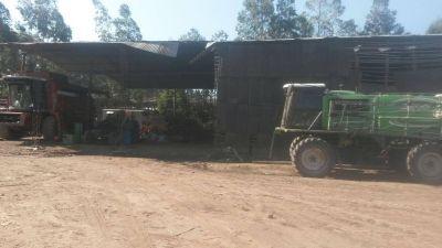 Detectan trabajo infantil en finca de Los Altos