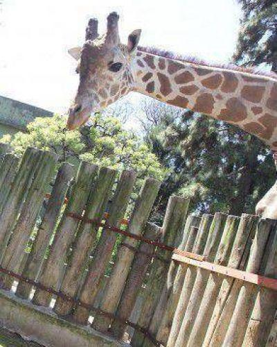 Muerte de cría reaviva debate por el zoológico